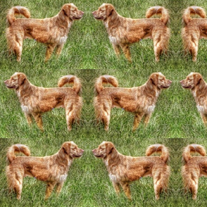 Duck Tollers In The Grass