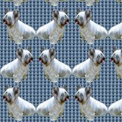 1599884_rskye_terrier2_shop_thumb
