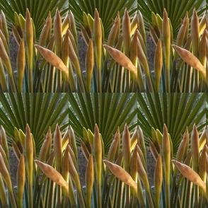 The daffodils- Part I