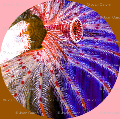 Popmobranchia