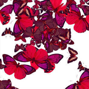 flutter4