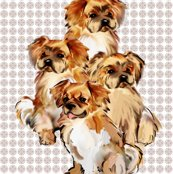 Rrrtibetan_spaniels_group__shop_thumb