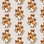 Rtibetan_spaniels_group__shop_thumb