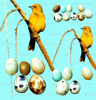 Yellow Birds and Eggs