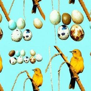 Yellow Birds and Eggs