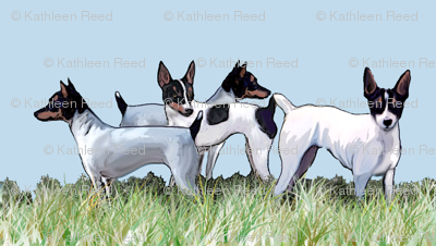 Toy Fox Terriers Group