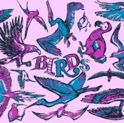 Rrbirds_pink_shop_thumb