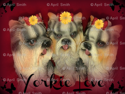 Yorkie Love