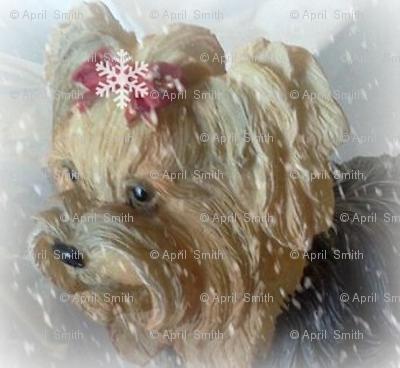 Snowflake Yorkie