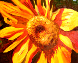 Images-floral-sunflowr-aldila1-july2012_thumb