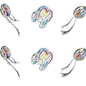 Comb Jellies
