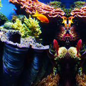 fish__35_