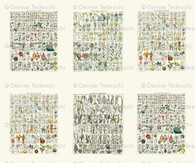 Med. Vintage Botanical Charts