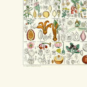 Med. Vintage Botanical Charts 