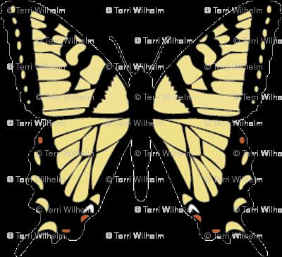 Butterfly-yellowtail