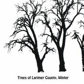 trees_of_larimer_county_30