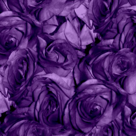 Royal_roses___peacoquette_designs___copyright_2012_shop_preview