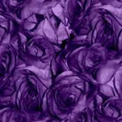 Royal_roses___peacoquette_designs___copyright_2012_shop_thumb