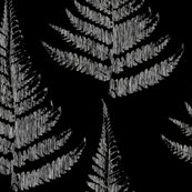 Fern_2_shop_thumb
