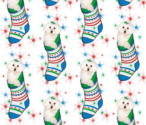Rbichon_in_stocking_shop_preview