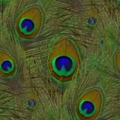 La Peacoquette Verte