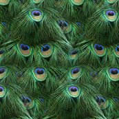 Tale_of_the_peacock_tail_by_peacoquette_designs_shop_thumb