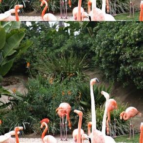 Flamingos in Balboa Park
