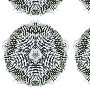 pine_cones_4