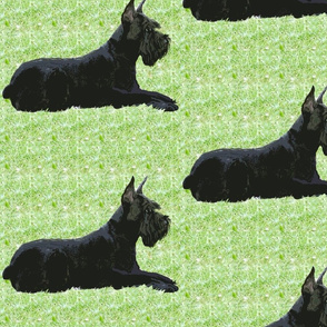 Giant Schnauzer In The Grass fabric