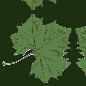 big_green_leaves
