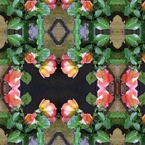 Tropicana Rosebuds