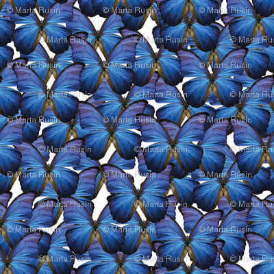 butterflies- navy