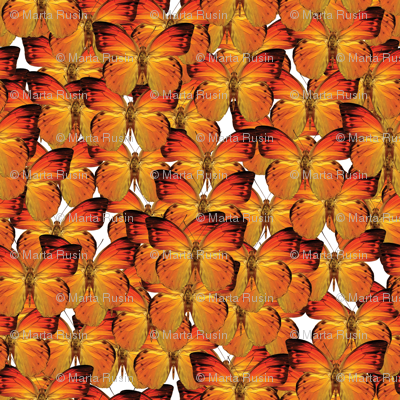 butterflies - orange