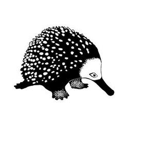Anteater 1