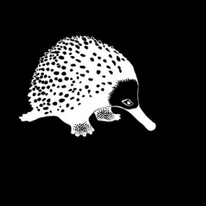 Anteater 2