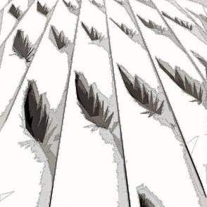 Feathers in Perspective