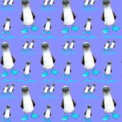 Rrblue_footed_booby_7_ed_ed_shop_thumb