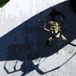 The Garden Spider