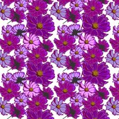 Rcosmos-flowers_shop_thumb