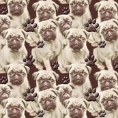 1658990_1658990_1658990_rseamless_pugs_mural8_copy_shop_thumb