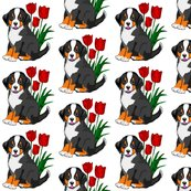 Rbernese_puppy_with_tulips_shop_thumb