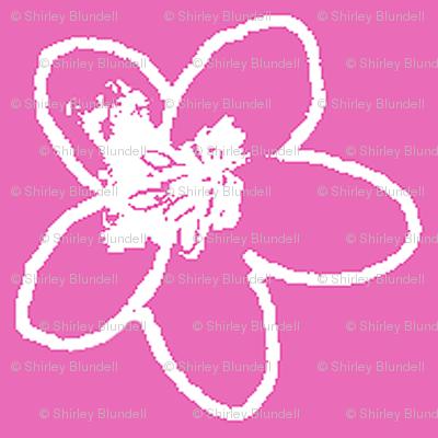 Plumeria Sketch2