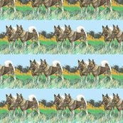 Rnorwegian_elkhounds_in_the_grass_shop_thumb