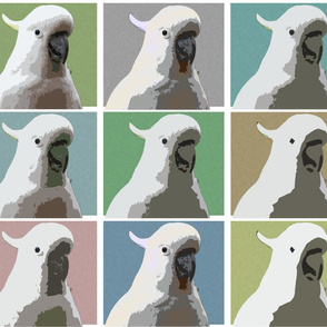 Subdued AW Cockatoos