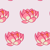 Lotus Lily