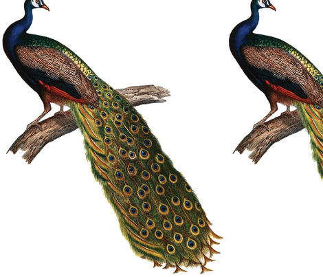 Vintage Peacock fabric by pencreations on Spoonflower - custom fabric