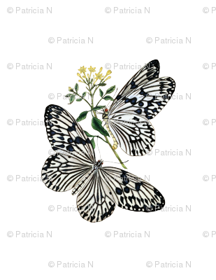 Vintage Black and White Butterflies