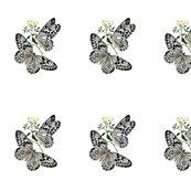 Rwhite-butterflies-image043_shop_thumb