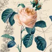 Md_peach_rose_shop_thumb