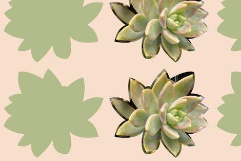 Rsucculent-cushion-2_shop_preview